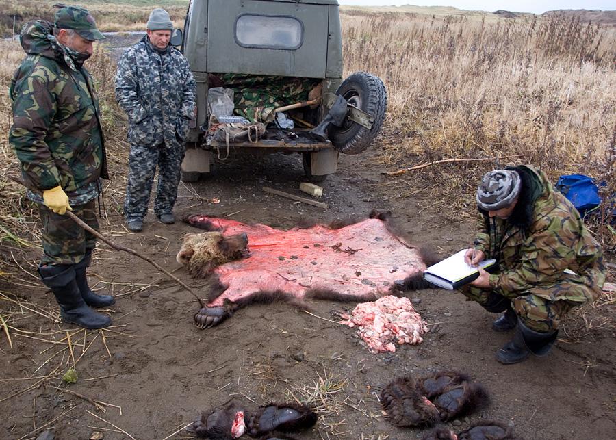 Браконьерство - борьба с браконьерством + профилактика браконьерства